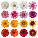 Fragrance florale